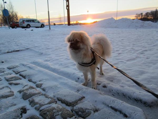 Vinterbild Toffe