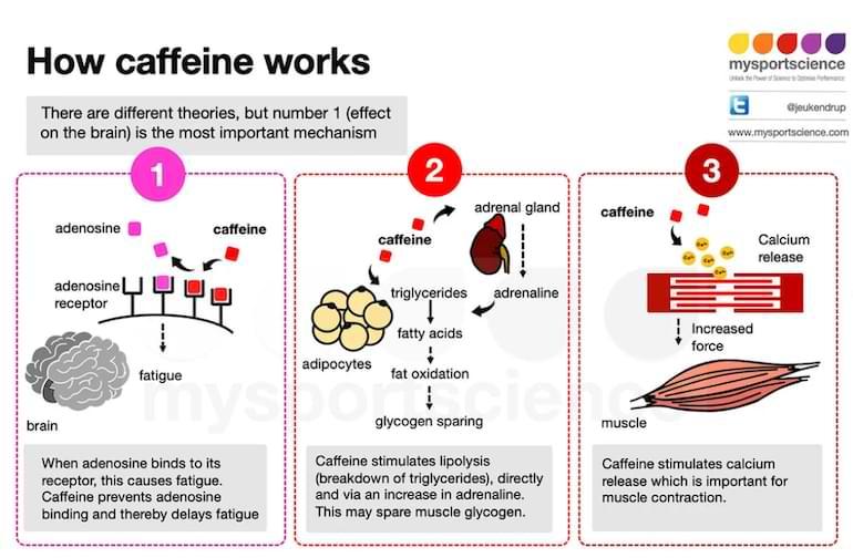 hur koffein fungerar